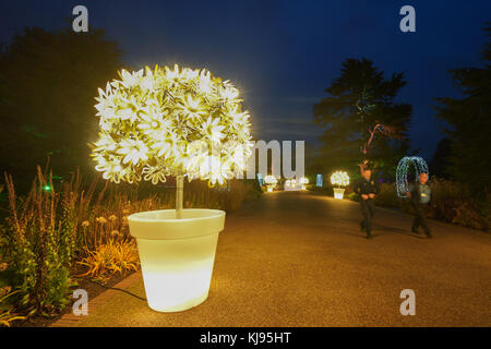 London, UK. 21st Nov, 2017. Night views of Christmas at Kew, an after-dark walk featuring light and sound installations - Stock Photo