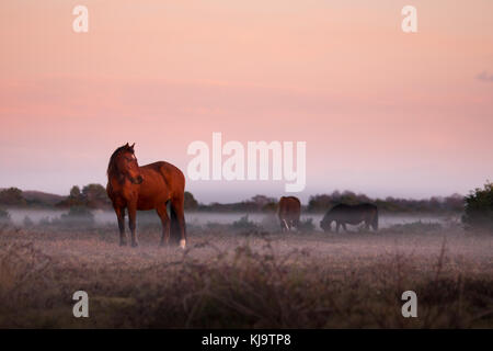 New Forest ponies in a misty sunset - Stock Photo