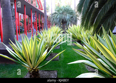 ... Yucca Plants At LACMA Palm Garden Next To Walkway To Broad Contemporary  Art Museum, Wilshire