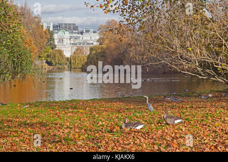 London, City of Westminster  Autumn in St James's Park, looking across the lake - Stock Photo