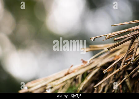 Water dripping from the roof of a house, made of leaves. focus is the dew - Stock Photo