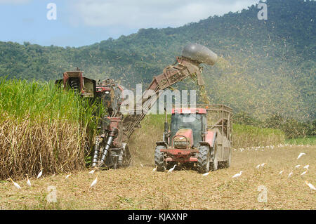 Tractor and combine harvester working in tandem to harvest sugarcane, near Cairns, Far North Queensland, FNQ, QLD, - Stock Photo