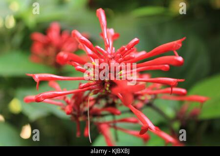 Exotic red flower in the forest - Stock Photo