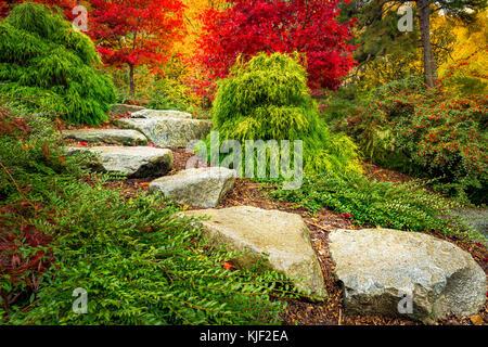 Stepping stones lead towards red japanese maple trees in Kubota Garden, Seattle Washington State. - Stock Photo