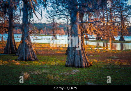 Caddo Lake is a lake and wetland located on the border between Texas and Louisiana. - Stock Photo