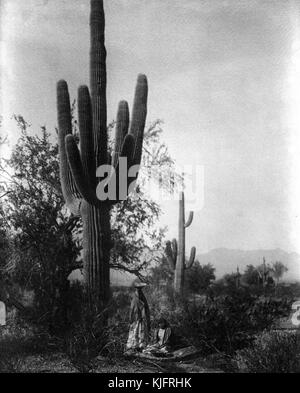 A photograph of two women harvesting the fruit of the saguaro cactus, the two women in the photograph belonged to - Stock Photo