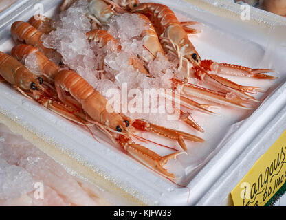Tray of fresh Scottish langoustines (Nephrops norvegicus),  otherwise known as scampi, with ice, on a local sea - Stock Photo