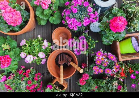 Various pink blooming potted plants on terrace - Stock Photo