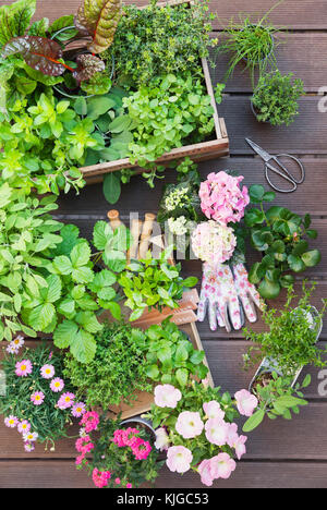 Various potted spice plants and blooming potted plants on terrace - Stock Photo