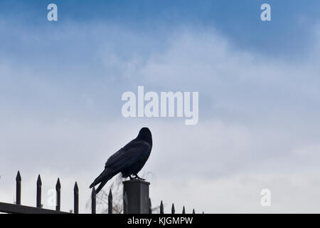crow sitting on a fence, looking away - Stock Photo