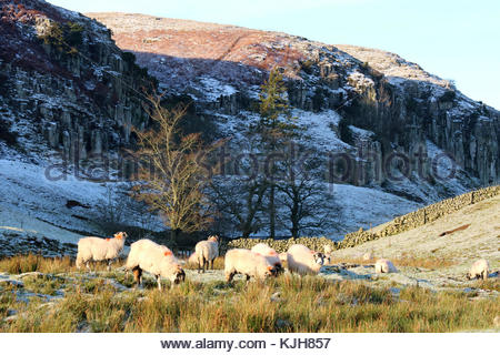 Holwick, Middleton-in-Teesdale, Co Durham, UK 25th November 2017 After an overnight snowfall in the North Pennine - Stock Photo