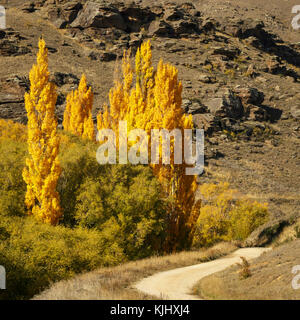 The Road to Nowhere. Autumn Poplars in Central Otago. - Stock Photo