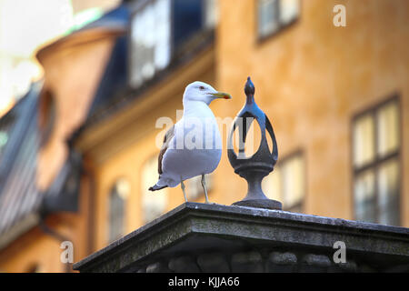 Seagull on top of statue Jarntorgspumpen in Gamla Stan, Stockholm, Sweden - Stock Photo