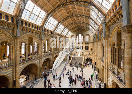 LONDON, ENGLAND - 16 SEPTEMBER 2017: Visitors flock in the newly  reimagined Hintze Hall of the Natural History - Stock Photo