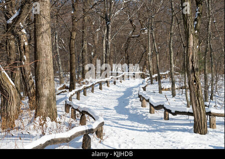 An empty trail curves into the distance in a scenic morning view of the woods of Central Park after a snow storm - Stock Photo