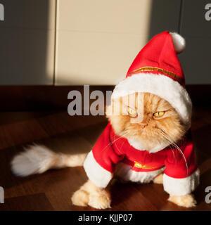 Santa Claus Cat - Stock Photo