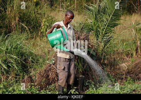 Farmer Apollo Byarunga received 2 loans from ENCOT microfinance. Uganda - Stock Photo