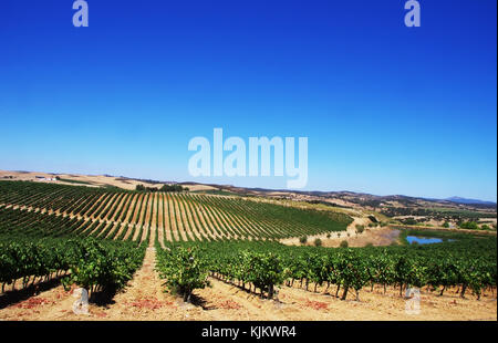 Vineyard at Alentejo region, south of  Portugal. - Stock Photo