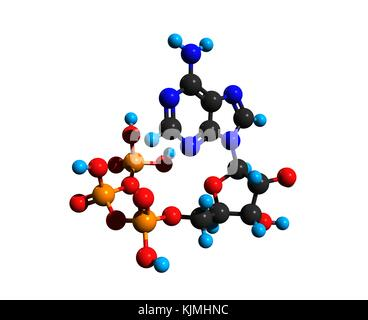 Molecular structure of adenosine triphosphate (ATP), a complex organic chemical, 3D rendering - Stock Photo