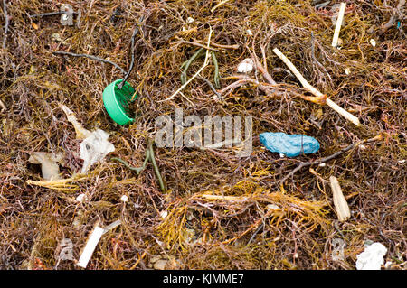 Plastic debris in seaweed on the seashore top view close-up - Stock Photo