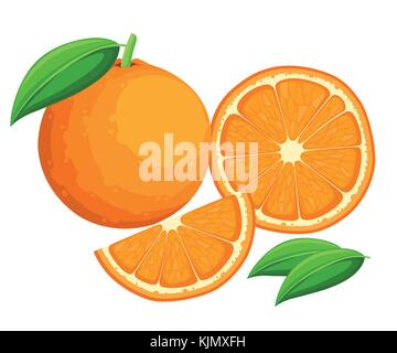 Orange with leaves whole and slices of oranges. Vector illustration of oranges. Vector illustration for decorative - Stock Photo