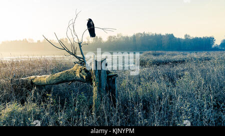 Sunrise over a misty pond with broken tree trunk and raven. Morning grass on the shore of lake and sunshine over - Stock Photo