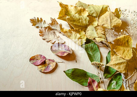 Dry wild flowers with a nutty,oak,plum leaves and twig of poplar with yellowed autumn leaves on the side of the - Stock Photo