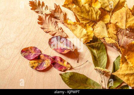 Autumn background of dried wild flowers and leaves of walnut,oak,plum with yellowed poplar branch  on a light  plywood - Stock Photo