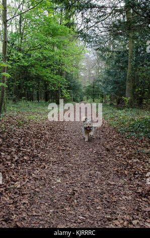 Dog walking through a forest - Stock Photo