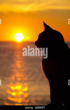 Black cat silhouetted against setting sun, Kalymnos, Greece - Stock Photo