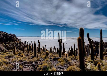 Photo taken in August 2017 in Uyuni Bolivia, South America: Isla Incahuasi in Salar de Uyuni cactus Island. Salar - Stock Photo