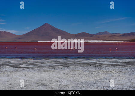 Photo taken in August 2017 in Altiplano Bolivia, South America: Pink Flamingos at Laguna Colorada Altiplano Bolivia - Stock Photo