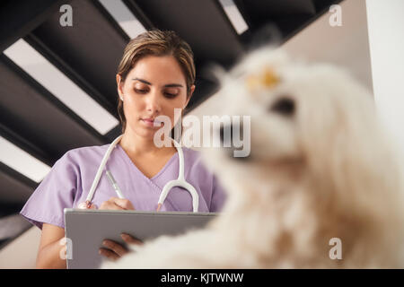 Medical practice with woman working as veterinary, vet using tablet computer during house call, after visit - Stock Photo