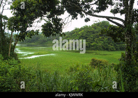 The shores of lake Arenal in Costa Rica are fully covered with dense forest. Grass grows in the shallow water. A - Stock Photo