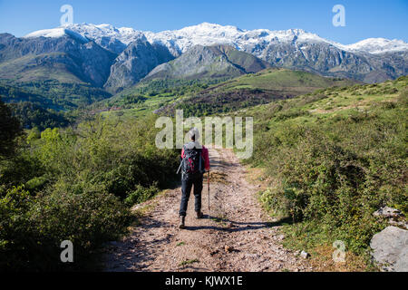 A female hiker walking on a track in the foothills of the Picos de Europa near Pandielo in northern Spian - Stock Photo