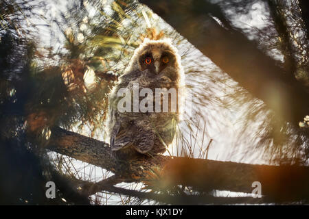 Cute owl chick sitting on the bench in the forest at sunset - Stock Photo