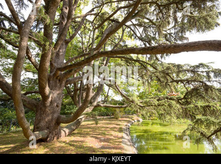mighty old tree with green spring leaves in summer background. - Stock Photo