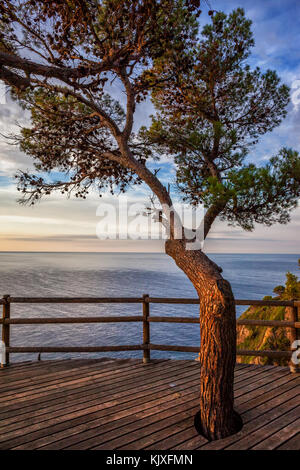 Viewpoint terrace with wooden flooring and a tree overlooking the sea at sunrise on Costa Brava, Catalonia, Spain - Stock Photo