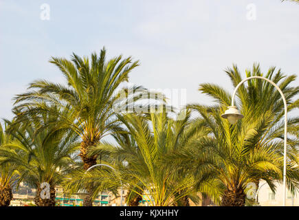 Palm trees against blue sky with street lamp, Palm trees at tropical coast, coconut tree,summer tree background. - Stock Photo