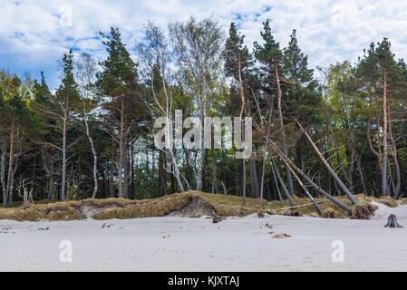 Shoreline erosion in strict protection area of Slowinski National Park on the Baltic coast in Pomeranian Voivodeship, - Stock Photo