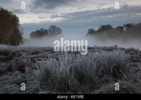 A cold frosty morning at dawn in Bushy Park, London, UK. A blanket of mist, autumnal trees and grass covered in - Stock Photo