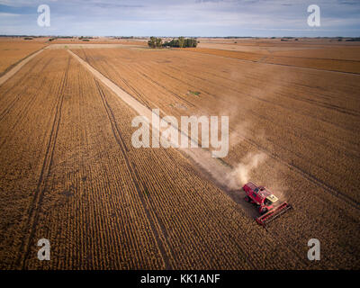 Corn harvest in Buenos Aires, Argentina - Stock Photo