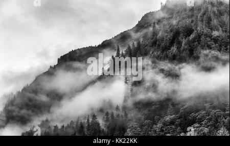 Misty foggy smoky mountain top with pine tree - Stock Photo
