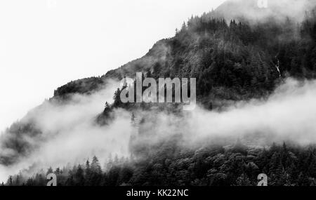 Misty foggy mountain top with pine tree - Stock Photo