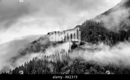 fog on mountain top with pine tree - Stock Photo