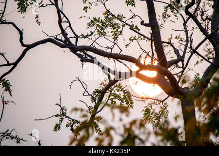 Close up tree branches with setting sun behind - Stock Photo