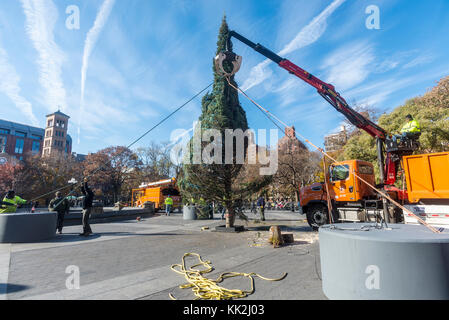 New York, USA. 27th November, 2017. The Annual Christmas tree arrived in Washington Square Park Monday morning. - Stock Photo