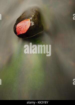 Thorny raspberry leaf caught on wet stone. A leaves trapped in the middle of a mountain stream. Stock Photo