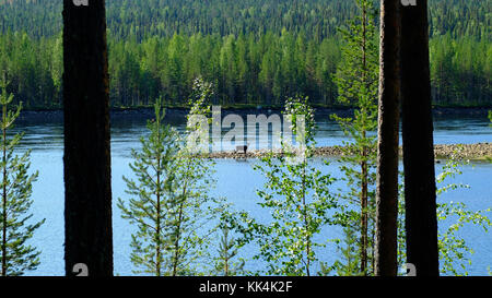 Sweden, Swedish Lapland. 2014/08/08. Muddus National Park, situated in the town of Jokkmokk and Gallivare, Norrbotten - Stock Photo