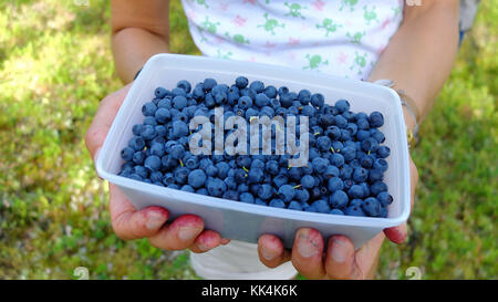 Sweden, Swedish Lapland. 2014/08/08. Child showing a punnet of wild blueberries collected in Muddus National Park, - Stock Photo